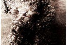 L'équipe Animalost! / Nous vous présentons l'équipe de choc qui bosse au quotidien pour Animalost