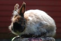 Rabbit Breeds / Covering all things rabbit. Every Bunny is different - before you bring one hope, find out which rabbit suits your family and lifestyle.