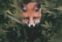 foxinspiration