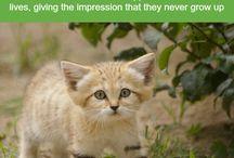 Wild Cat Facts
