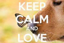 Keep calm ❤️ / by Rebecca Coffey