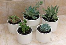 pots pour plantes pas chers