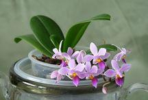 Орхідеї / by Olha Myturak