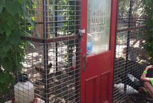 Chicken coop / Ideas for future reference / by Casey Luscher
