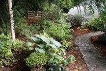 Garden / by Diana Hill Hoekstra
