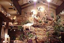 Animal showroom