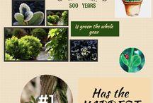 Infografics Boxwood