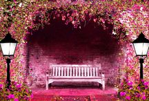 The flower bench / flowers