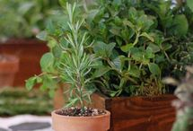 Decorating with herbs