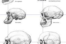 hominidos