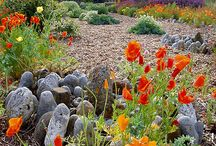Coast garden