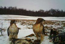 2017 Trailcampro.com Winter Predator Photo Contest