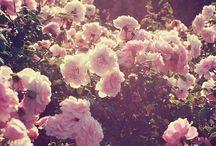 garden | flower | luvly