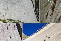 Park Narodowy Gran Paradiso we Włoszech / Park Narodowy Gran Paradiso jest położony pośród pasm górskich w północno-zachodnich Włoszech. Jedną z atrakcji jaką możemy zobaczyć w tymże parku jest tama a na jej prawie pionowych ścianach...kozy!