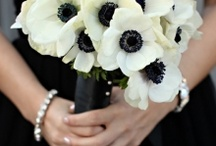 Black and white / Chic and simplistic