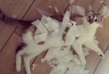 """#MONCHATSDANSTOUSSESETATS / Retrouvez ici les photos de participations pour le  concours Instagram """"Mon chat dans tous ses états"""" (15 au 30 avril 2016). Les instagrameurs sont inviter à poster une photo de leur chat dans une situation cocasse ou insolite !"""