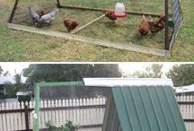 Chicken coupe