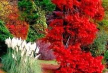 maravillosa naturaleza