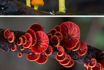 Fungi / The diversity and color of fungi is amazing.