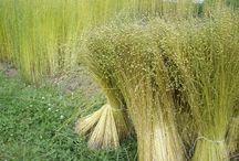 plant fibres
