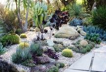Front Garden Waimak