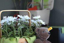 preschool, Teddy Bear picnic