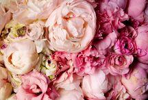 Peoner / Blomster