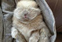 Cute / Trop chou