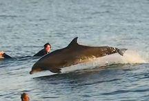 Delfinek / delfinek