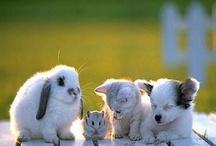 Cutie Patooties