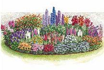 endless bloom perennial garden
