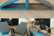 Ideas para perros