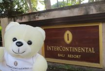 Putu Bear / SAY HELLO TO PUTU!  Today, we have Putu the Bear at InterContinental Bali Resort. Putu is the Balinese name for the first child in the family. We believe in supporting a sustainable environment and the authentic local culture. That's why Putu has invited to live at the resort and enjoy all the activities. He's always happy and will share to us the resort experience. Stay update for Putu's story on our timeline!