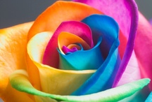 Flowers / by Carrie Schumacher