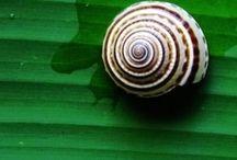 Biomimética | Biomimicry / Inovação inspirada pela natureza.  Innovation inspired by nature.