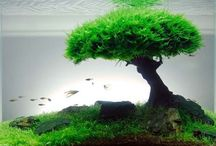 Aquascape