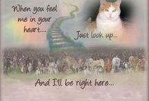 Healing pet loss