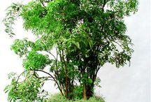 mini árvores