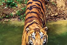 Jungle Tourism / Pench National Park is perfect for Jungle Tourism.