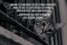 Katze!!!