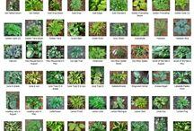 identificação plantas