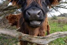 Muh / Kühe :) und Manatees