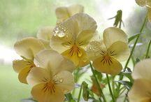 красивое фото:цветы