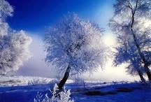 Seasons :) / by Lynnsey Trog