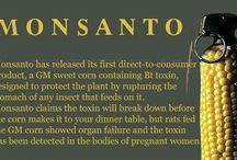 Beware of Monsanto & GM Foods / There are so many genetically modified foods in our food chain. I eat local, organic, and bio-dynamic wherever possible to keep safe.