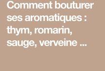 bouturage