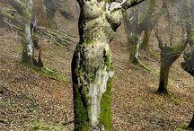 Matka Příroda