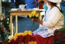 Rose Ecuador / Meraviglia e Colori