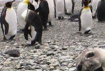 penguins  / by Becky Steinfeldt