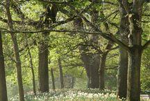 Jardins botaniques féériques